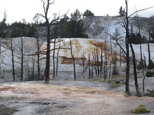 A photograph of the strange geological activity at Yellowstone Park