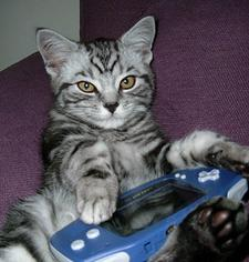 A photograph of a cat with a game system
