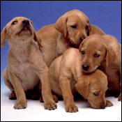 A photograph from Puppy Bowl 3