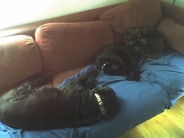 A Photograph of two cats and a dog sleeping on a couch together